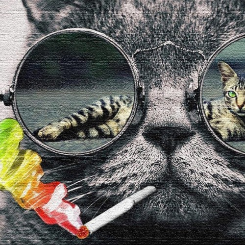 cat.001